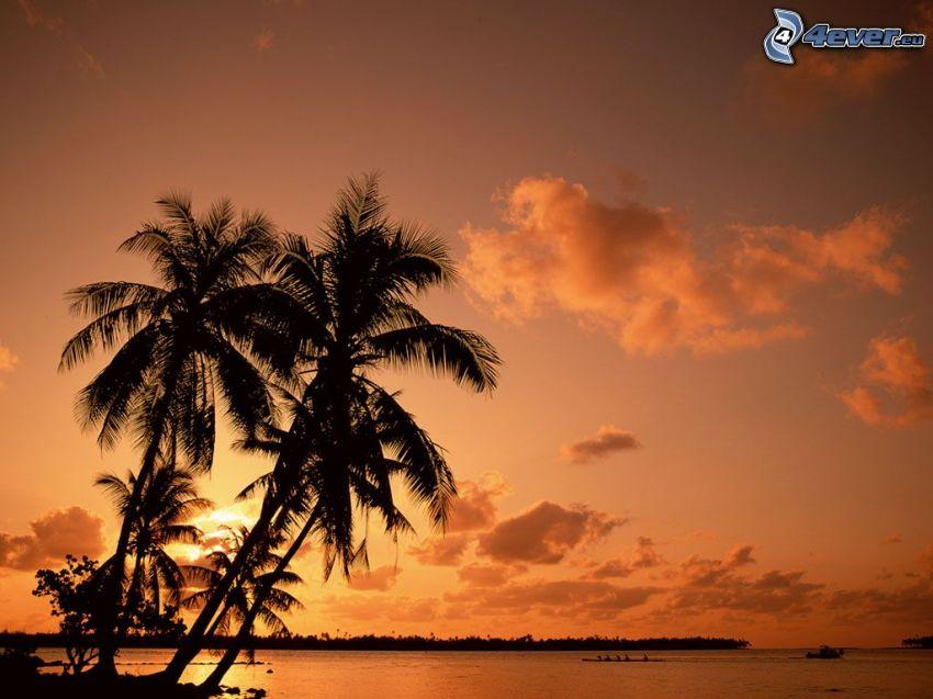 palmer vid solnedgången, strand, moln, hav