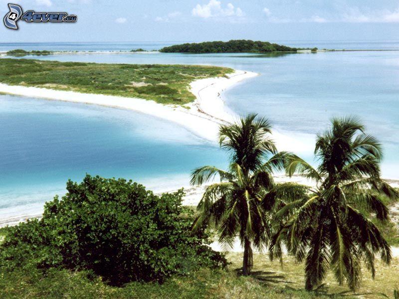 palmö, sandstrand, tropiskt hav