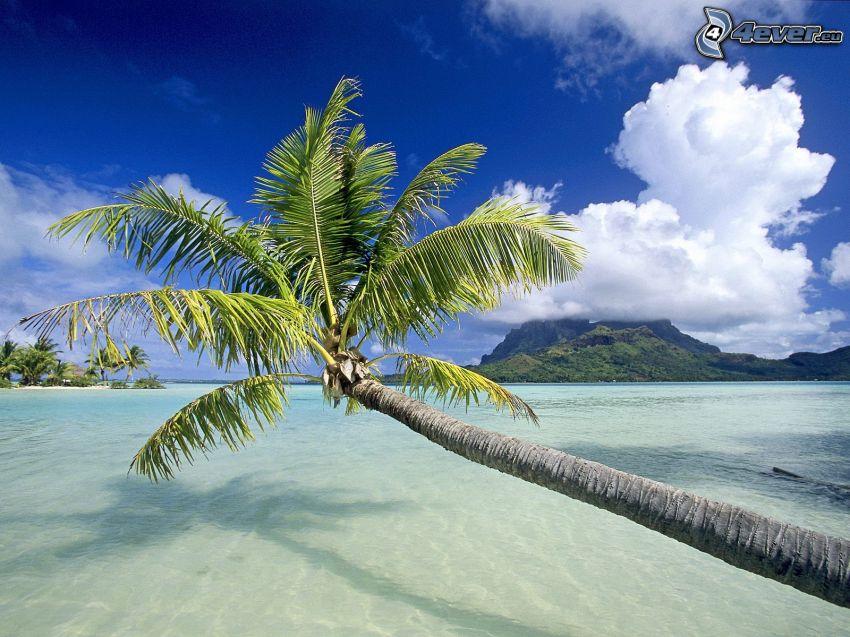 palmträd över hav, azurblå hav, moln, ö