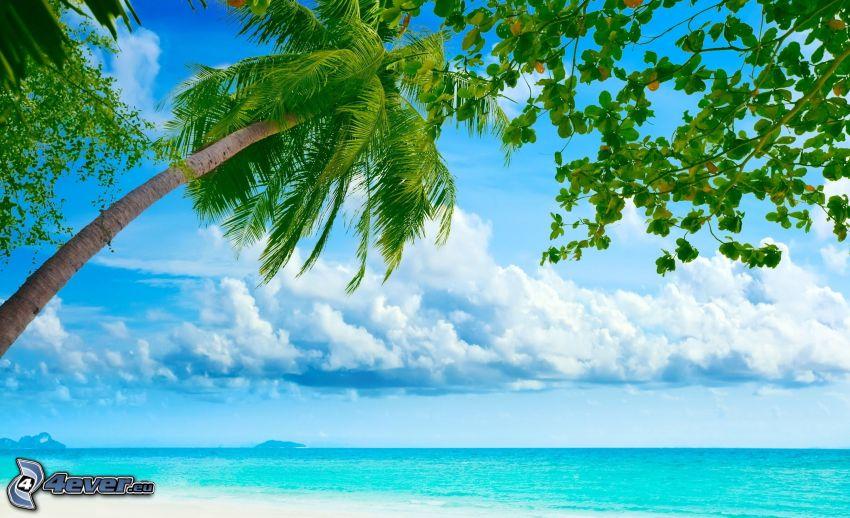 palmträd över hav, azurblå hav, moln