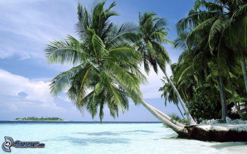 palmträd över hav, azurblå sommarhav, ö