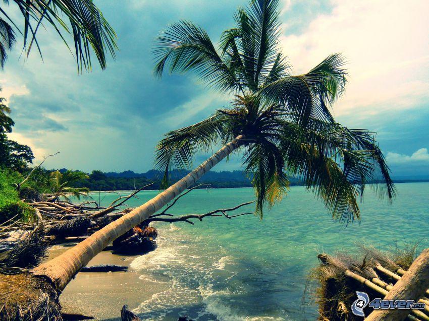 palmträd över hav, strand