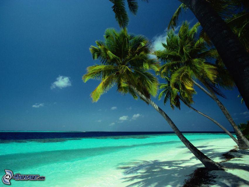 palmträd över havet, azurblå hav, strand
