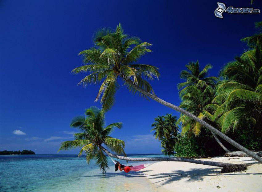 palmträd över havet, strand, hängmatta