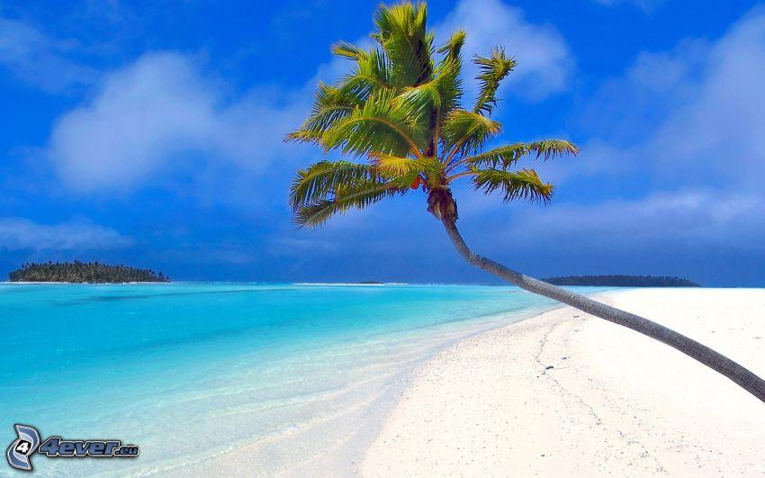 palmträd över sandstrand, azurblå sommarhav, ö