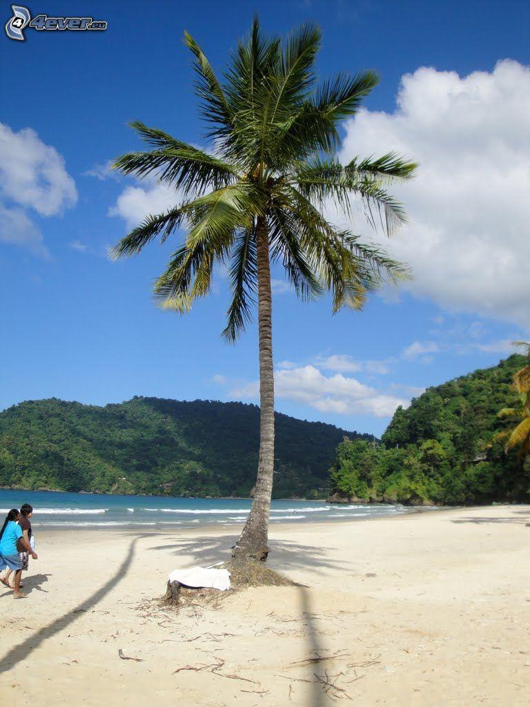 palmträd över sandstrand, kullar, hav