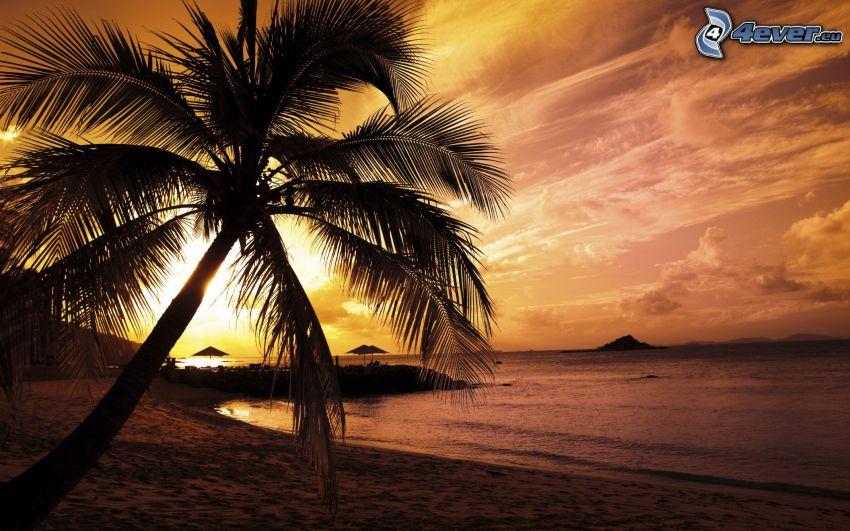 palmträd över sandstrand, solnedgång över strand