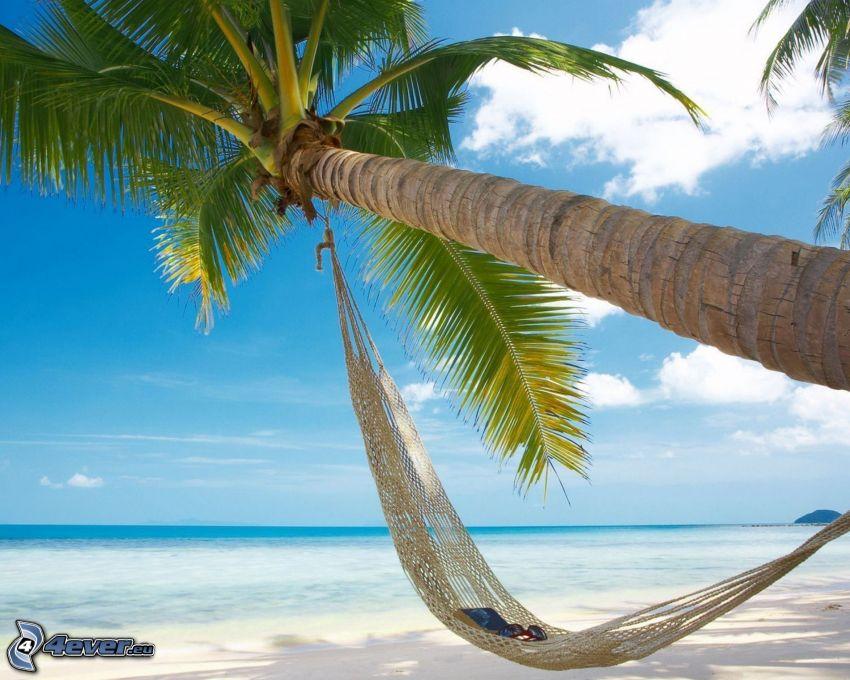 palmträd över sandstrand, solstol, hav