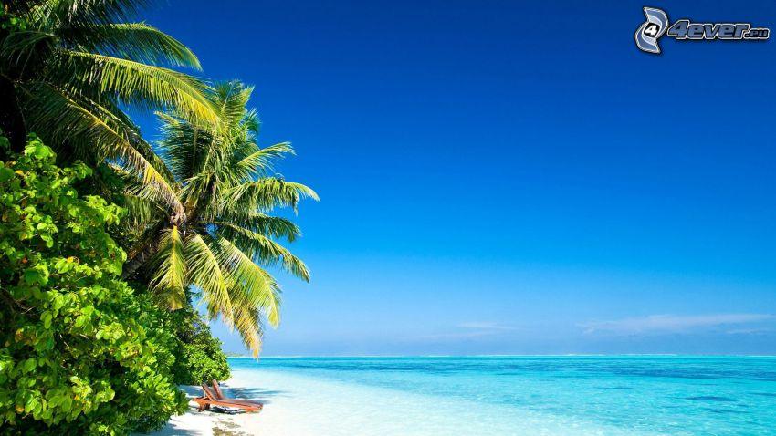 sandstrand, azurblå hav, palmer, blå himmel