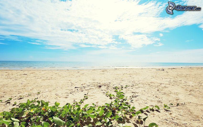 sandstrand, hav, växt
