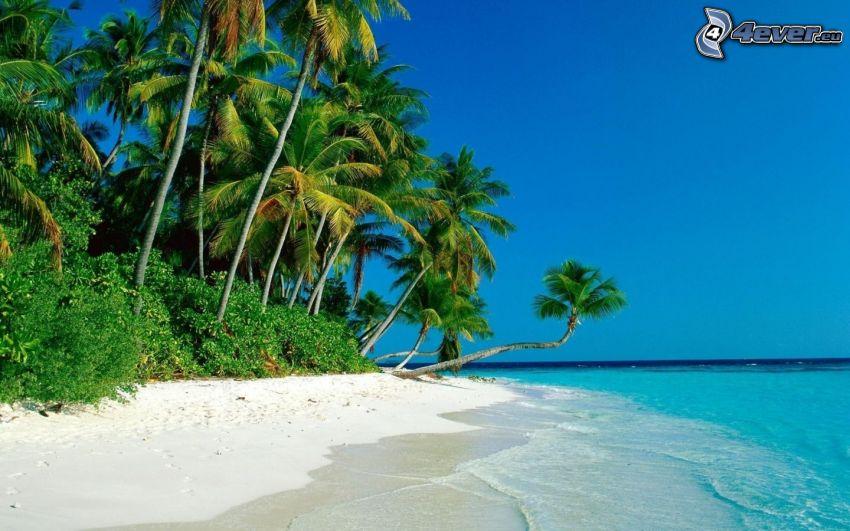 sandstrand, palmer, azurblå hav
