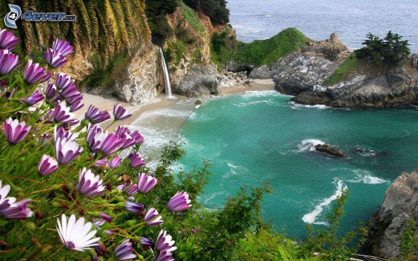 sjö, lila blommor, hav, klippor