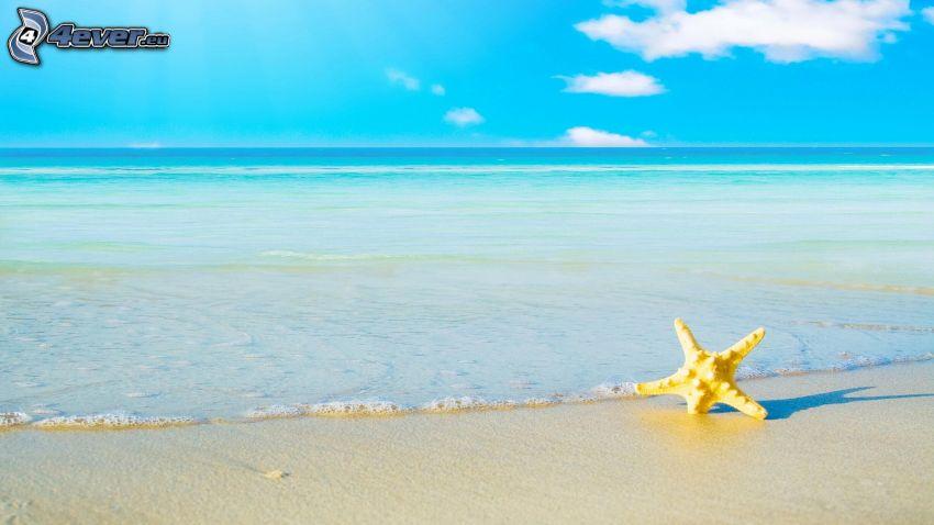 sjöstjärna, öppet hav, sandstrand