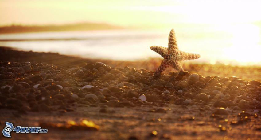 sjöstjärna, strand, solstrålar, småsten