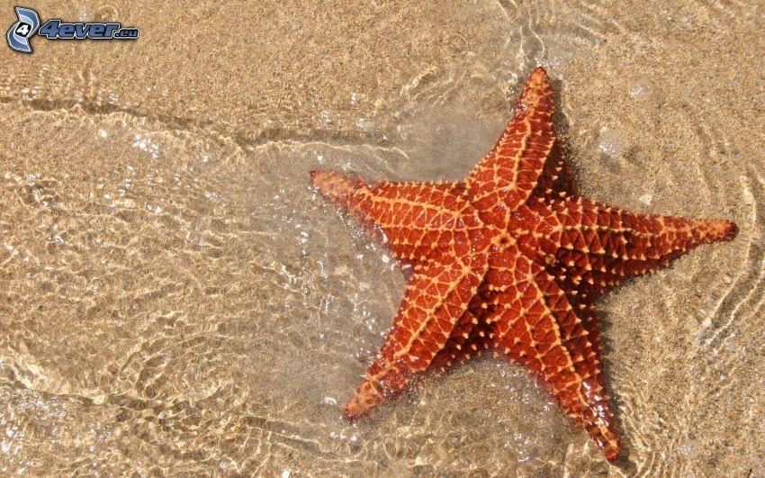 sjöstjärna, vatten, sand