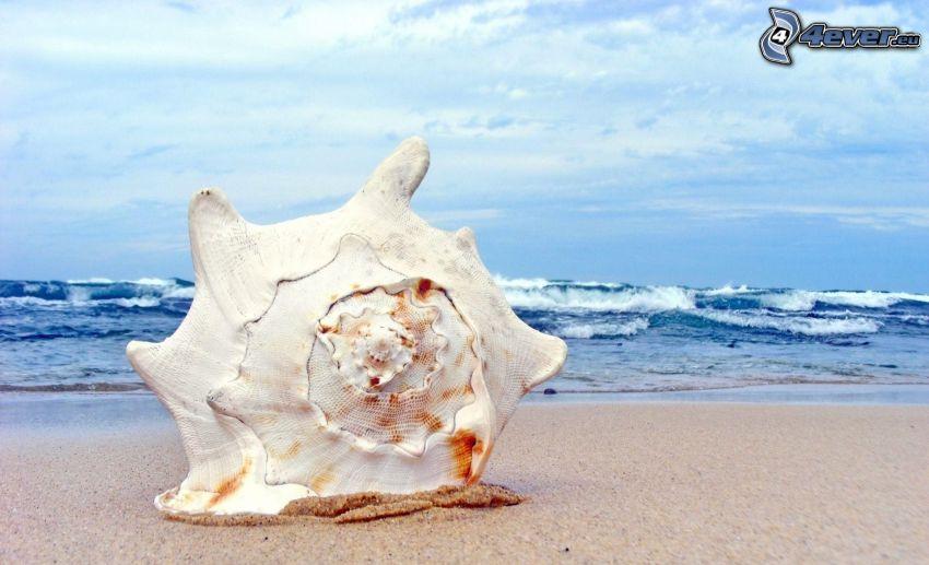 snäcka på stranden, hav