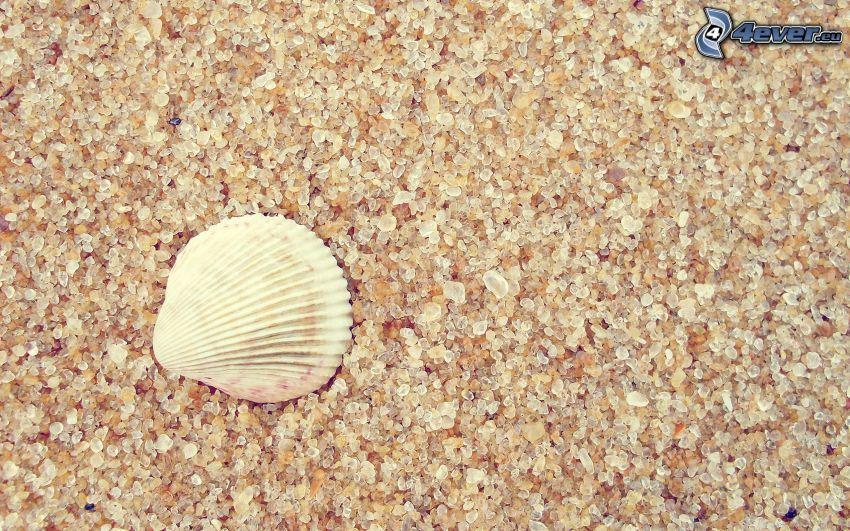 snäcka på stranden