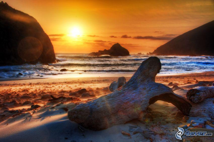 solnedgång över hav, kust, torr stam