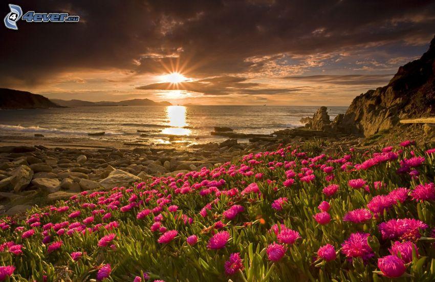solnedgång över havet, rosa blommor, stenig kust, mörka moln över hav