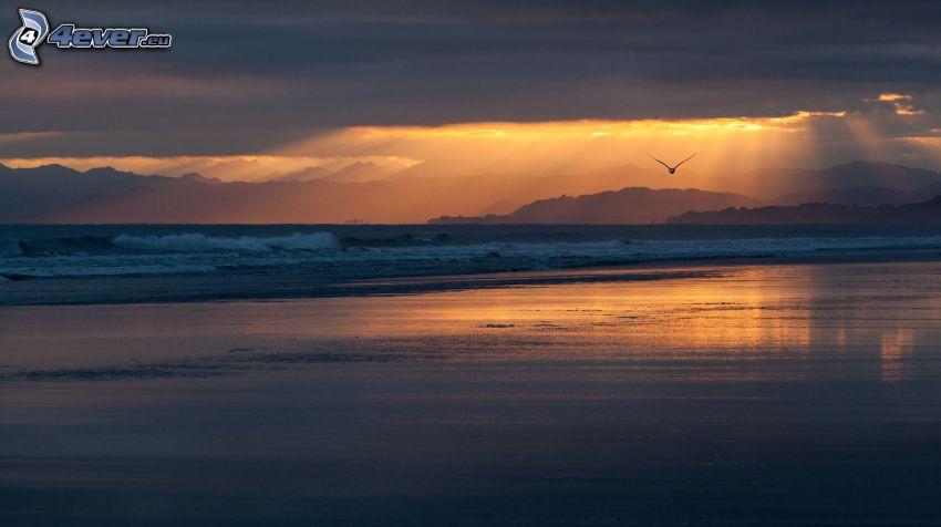 solnedgång vid havet, solstrålar bakom moln, mås