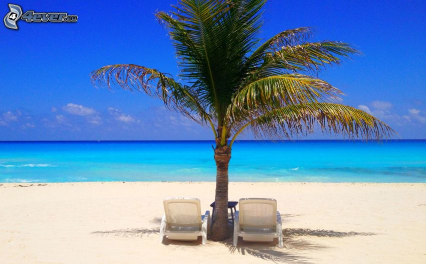 solstolar, palm, öppet hav, sandstrand