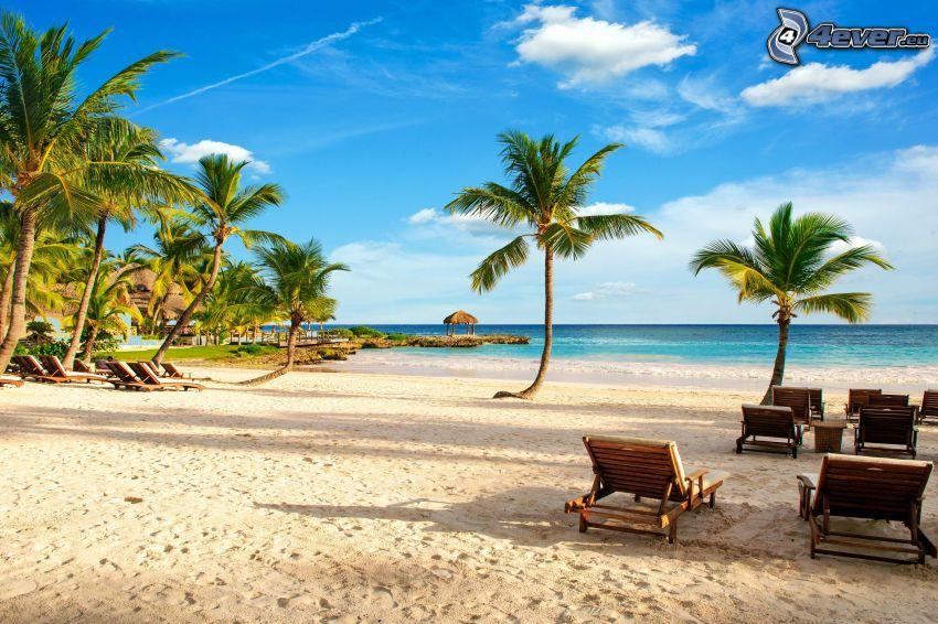 solstolar, sandstrand, palmer, öppet hav