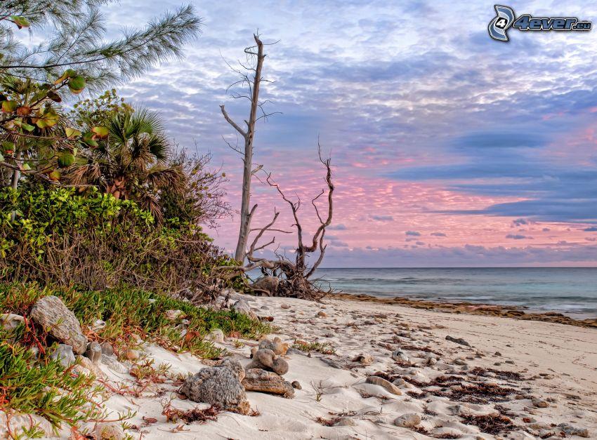 strand, hav, träd, kvällshimmel