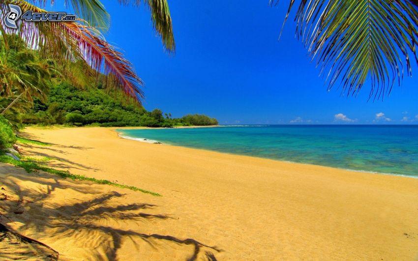 strand, kust, tropiskt hav, palmer
