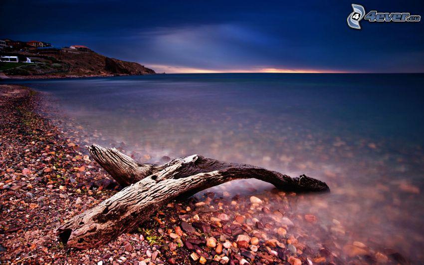 trä, stenig strand