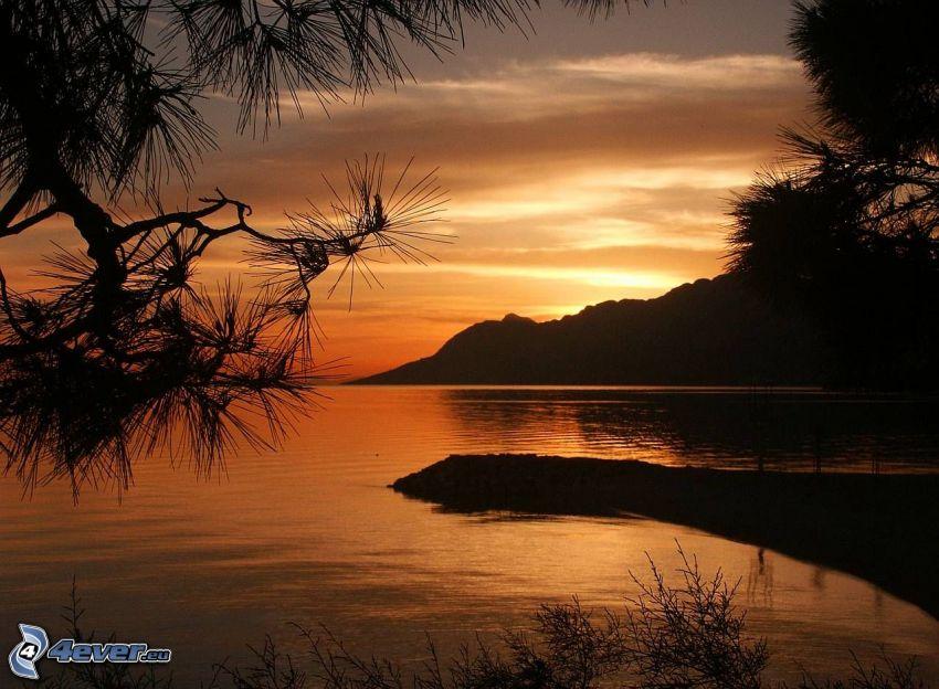 vik, efter solnedgången, hav, kulle, silhuett, barrträd