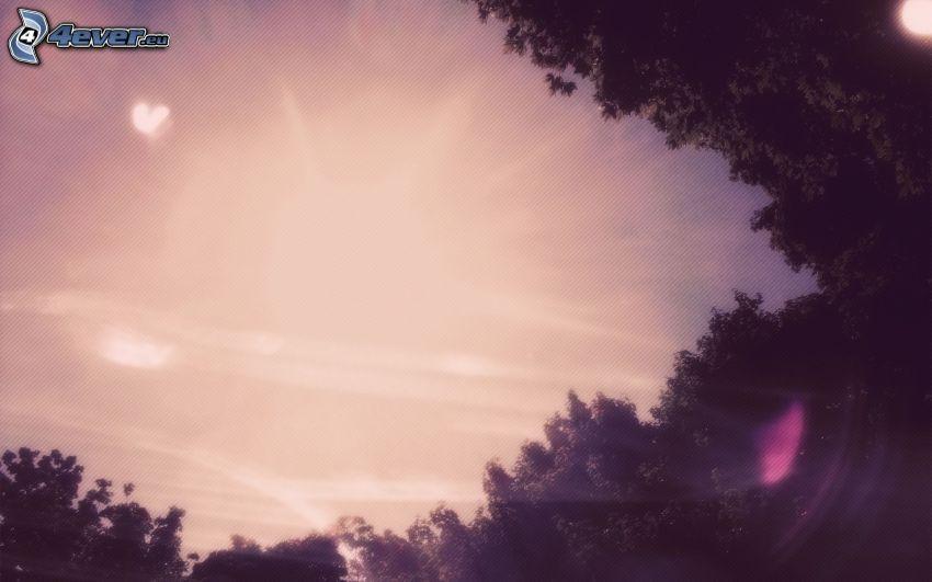 himmel, träd