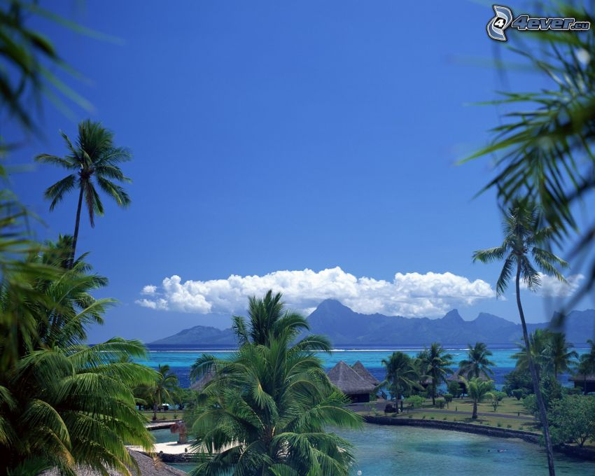 bungalows vid havet på Bora Bora, havsutsikt, palmer, vik