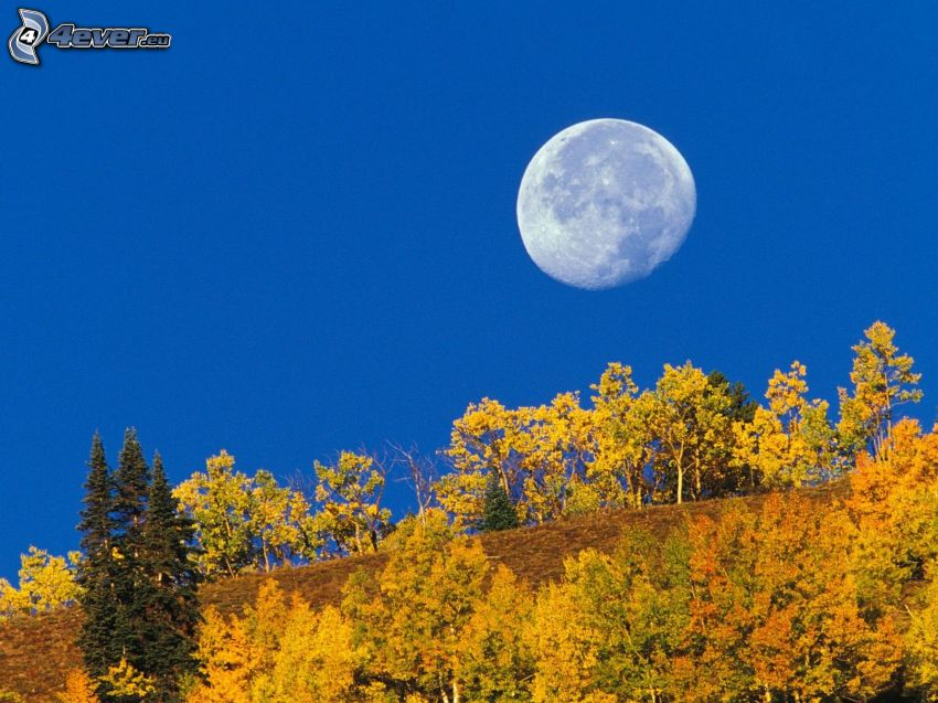 Månen, gula träd, blå himmel