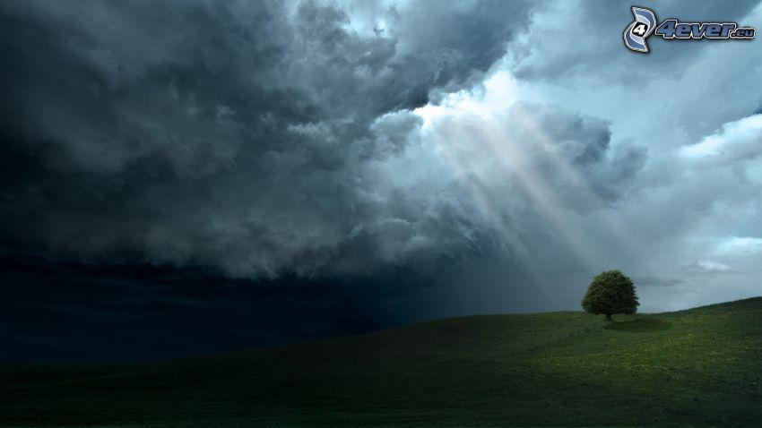 moln, solstrålar, träd över fält