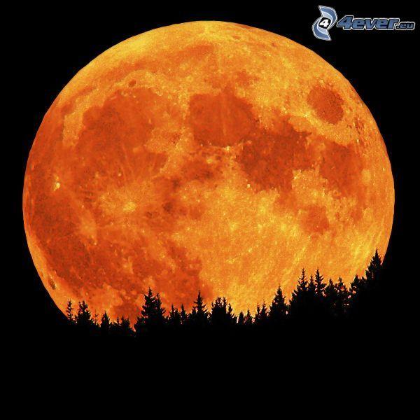 orange måne, fullmåne, silhuett av skog, siluetter av träd