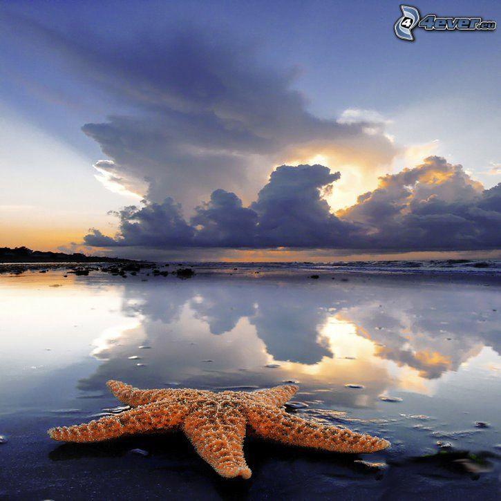 sjöstjärna, strand, moln, natur