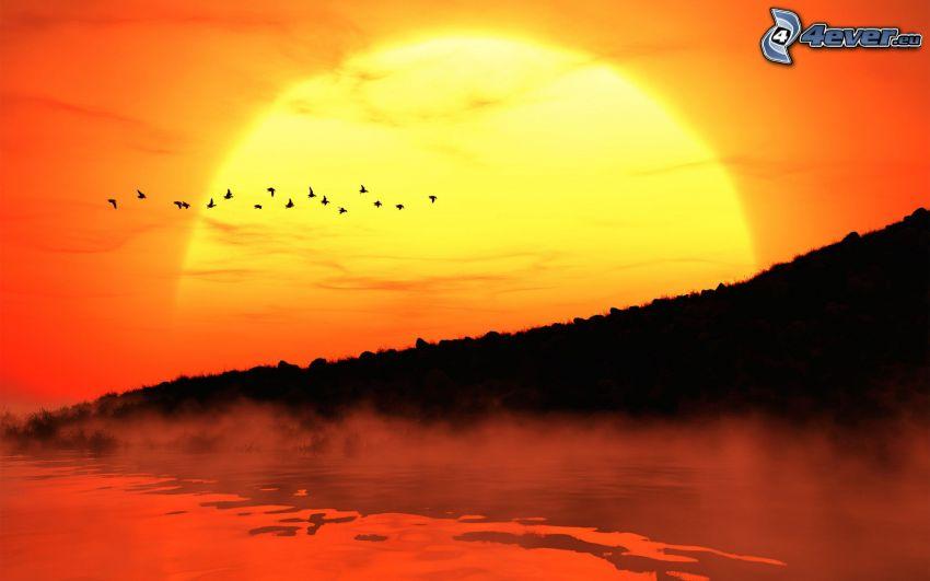 solnedgång, fåglar, siluetter, sjö, ånga