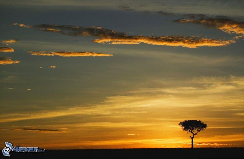 solnedgång på savann, ensamt träd, siluett av ett träd, äng, kvällsjus