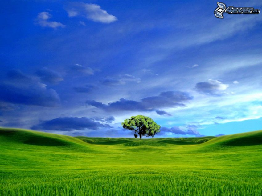 träd över fält, grön äng, moln