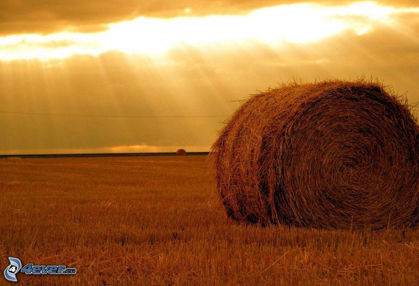 hö efter skörd, nyklippt fält, solstrålar