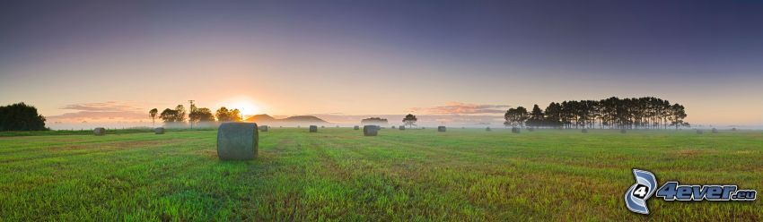 hö efter skörd, panorama, träd, soluppgång, markdimma