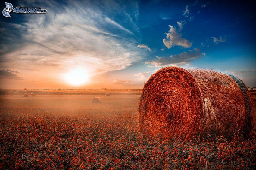 hö efter skörd, solnedgång över fält