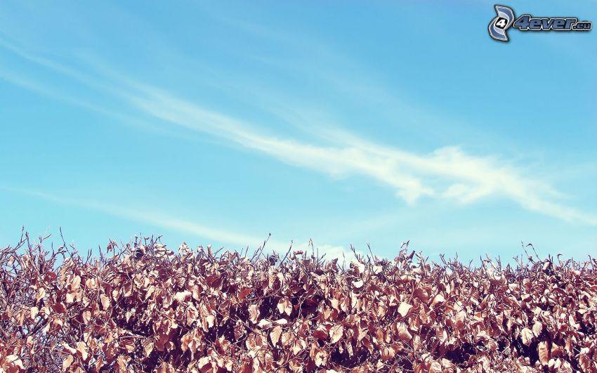 höstlöv, blå himmel