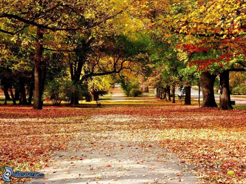 höstpark, gula träd, trottoar