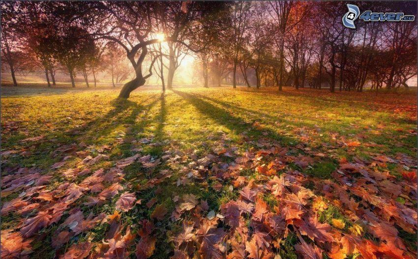 höstpark, nedfallna löv, solstrålar