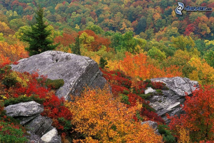 höstskog, klippor