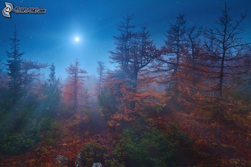 höstskog, natt, måne