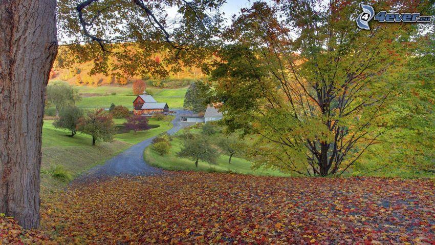 höstträd, nedfallna löv, väg
