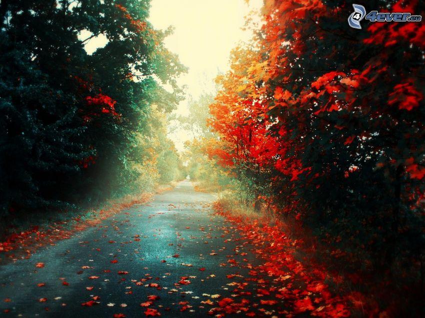 höstväg mellan träden, röda blad, höst