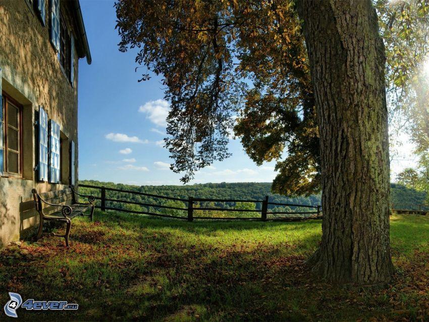 hus, bänk, träd, trästaket